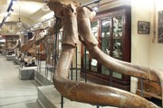 Museo Paleontologico di Montevarchi