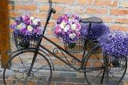 Festa della Donna in Bicicletta a Verona